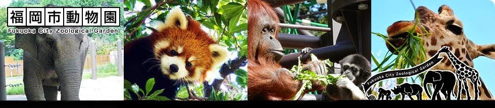 福岡市動物園ブログ