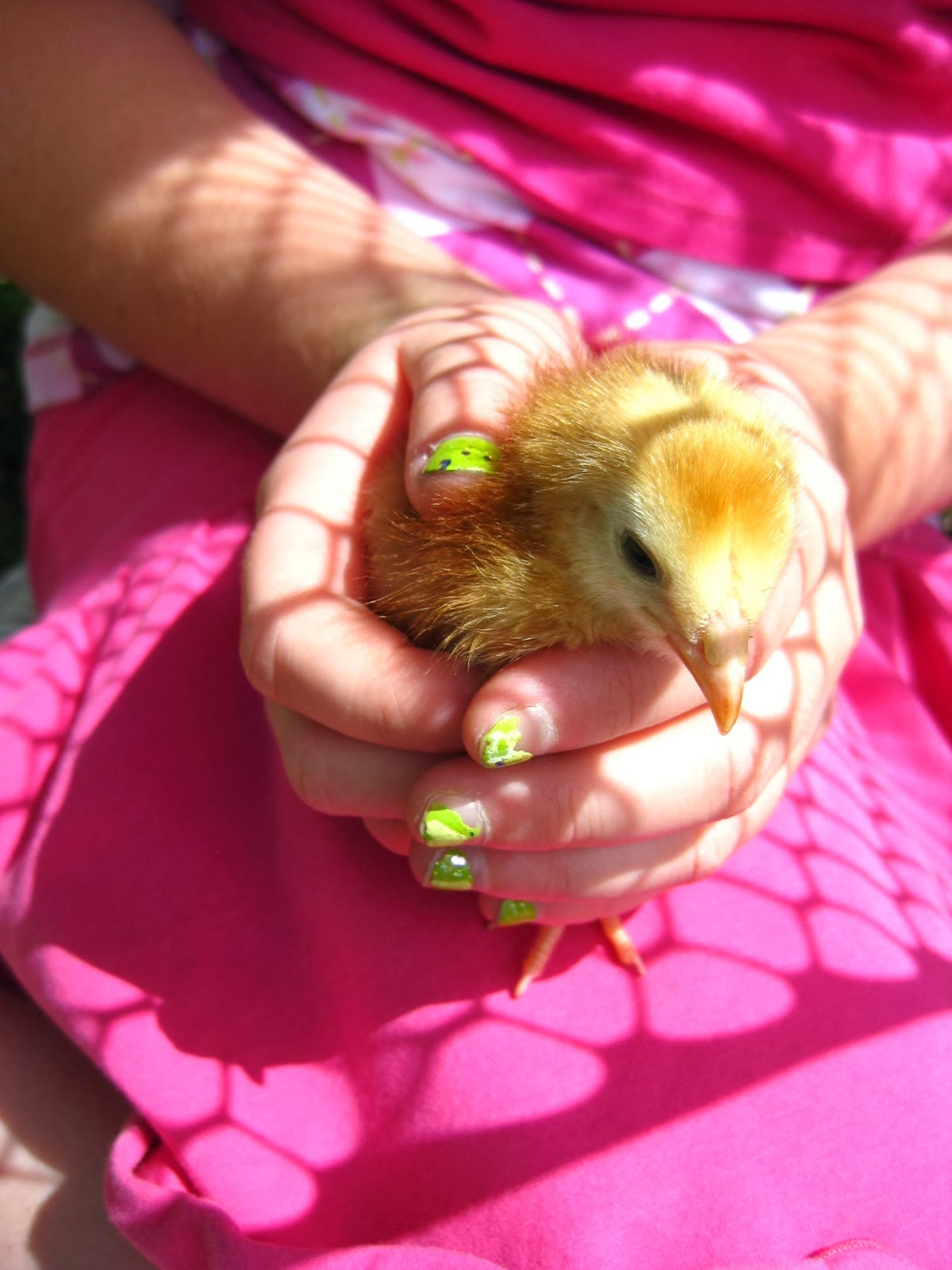 Our Chicks!