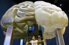 Makan Ikan Menambah Volume Otak dan Lebih Pintar