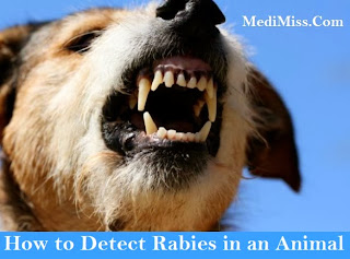How to Detect Rabies in an Animal