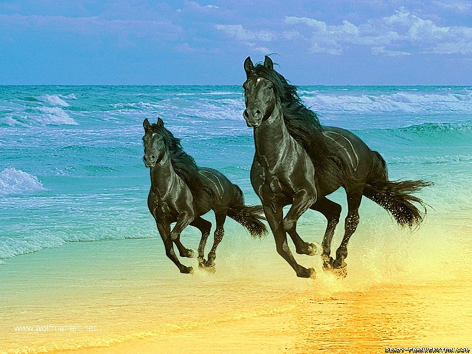 http://3.bp.blogspot.com/-enU9XiBPsQQ/UYIJupTLioI/AAAAAAAACkI/3KYESlFA2rU/s1600/Horse++hd+wallpapers+3.jpg