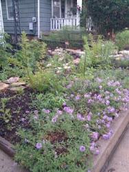Front Yard Wildflower Garden