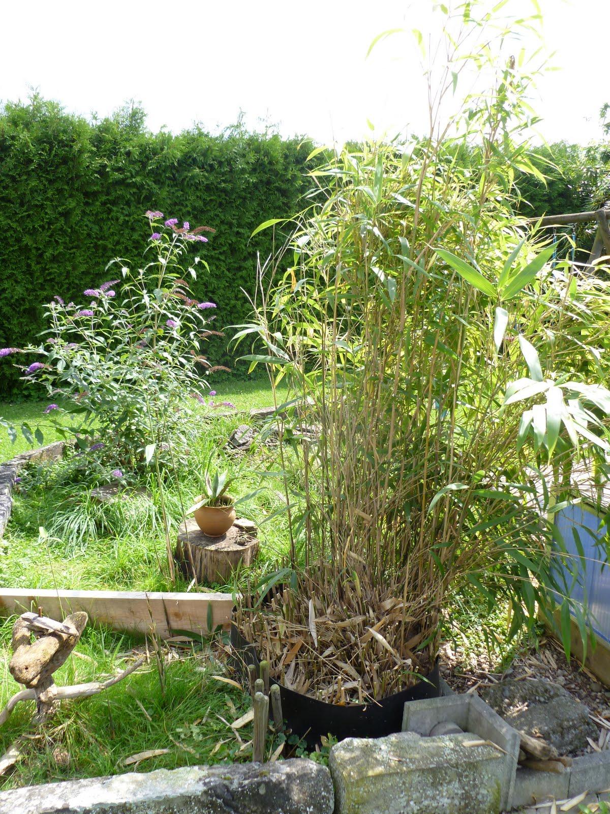 greenday bambusplage. Black Bedroom Furniture Sets. Home Design Ideas