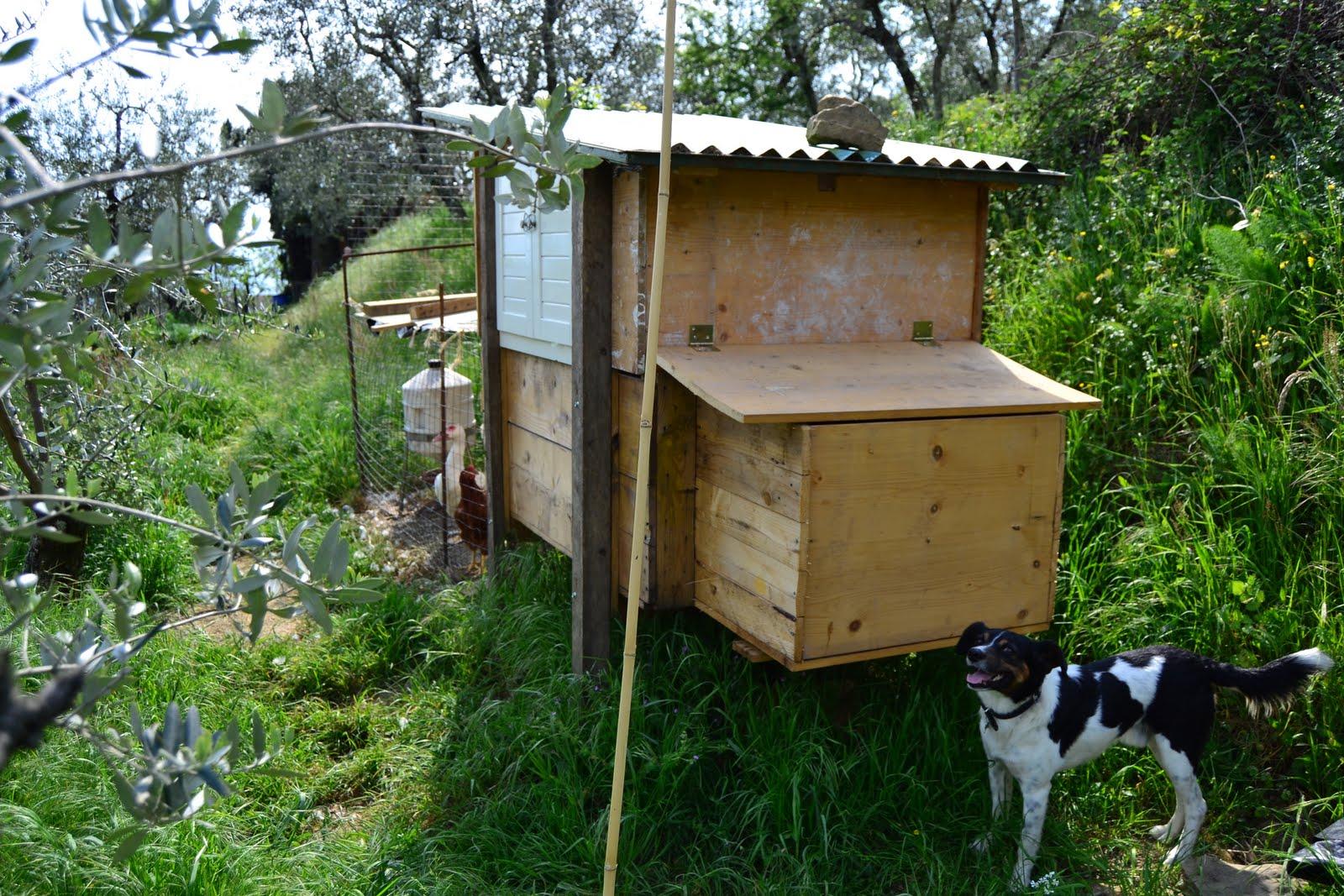 I sogni di harlock costruire un pollaio a costo zero in for Costo dei garage da costruire