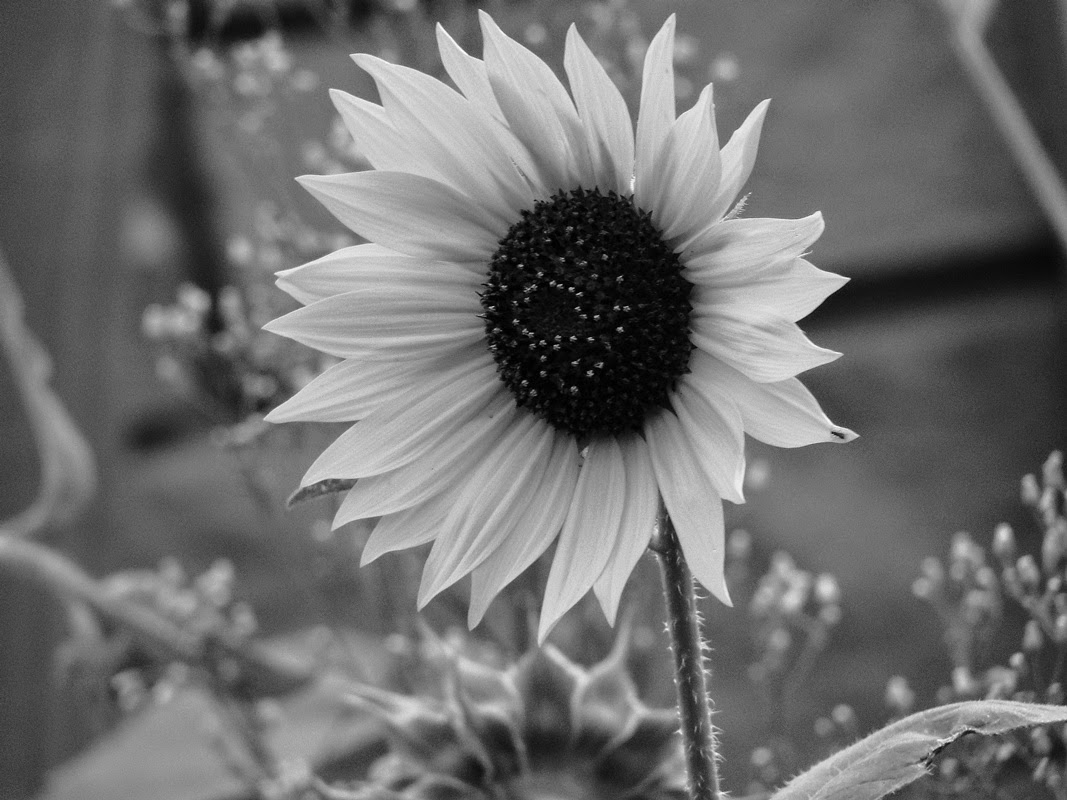 Black and white hawaiian flowers many flowers black and white flowers black and white hawaiian flowers izmirmasajfo