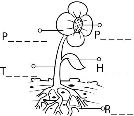 Las plantas para los niños de 4º de Primaria: Actividad 1