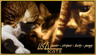 visit our CatBlog