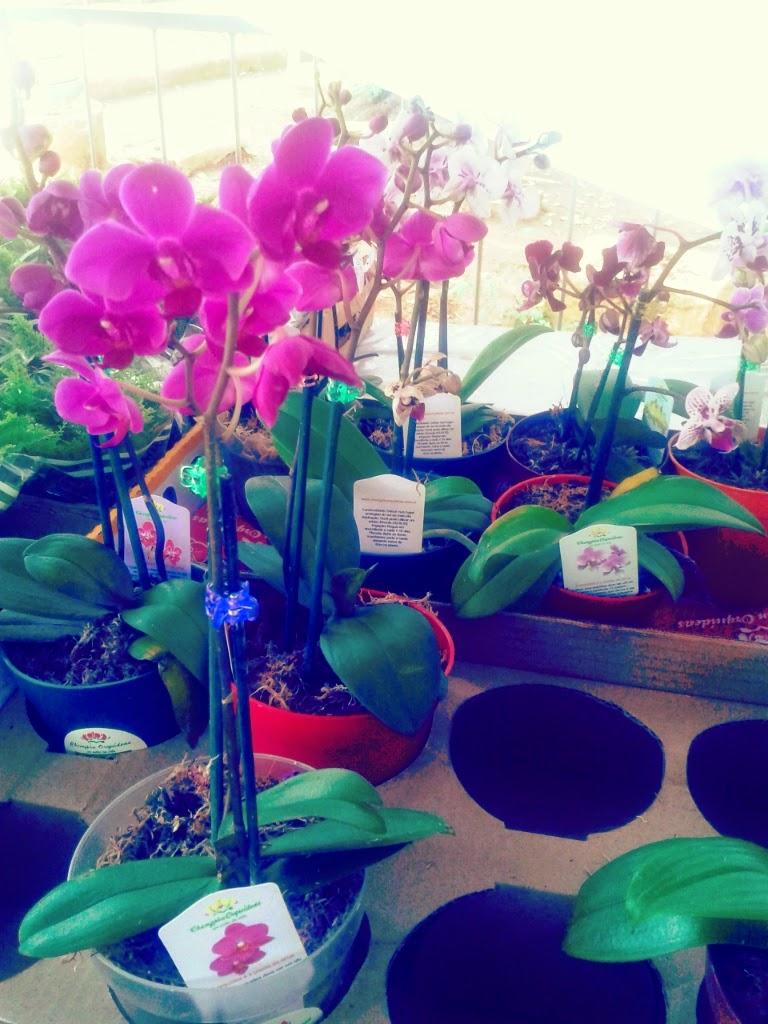 Fotos Holambra Festa Das Flores - Holambra, a Cidade das Flores, é um pedaço da Holanda