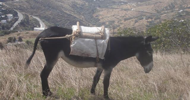 Με αριθμό κυκλοφορίας τα γαϊδουράκια σε περιοχή της Κρήτης!