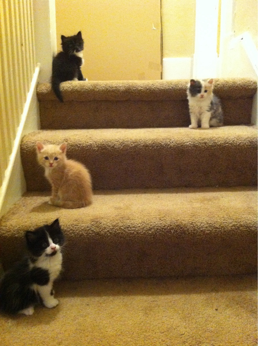 Funny cat pictures part 14, kittens on stairs