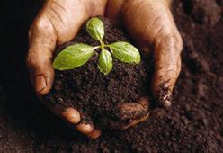 şifalı bitkiler, şifalı nebatlar, officinal plants