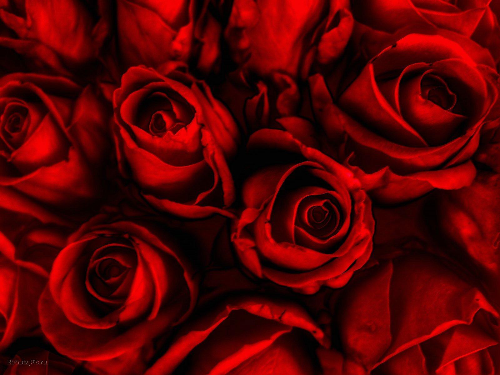 http://3.bp.blogspot.com/-eotM0uBT0yU/TzZ-xKnNucI/AAAAAAAAHq4/jekH9gtWhTg/s1600/red-roses-wallpaper.jpg