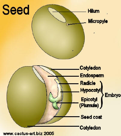 FORESTRY - LEARNING: THE PARTS OF A SEED