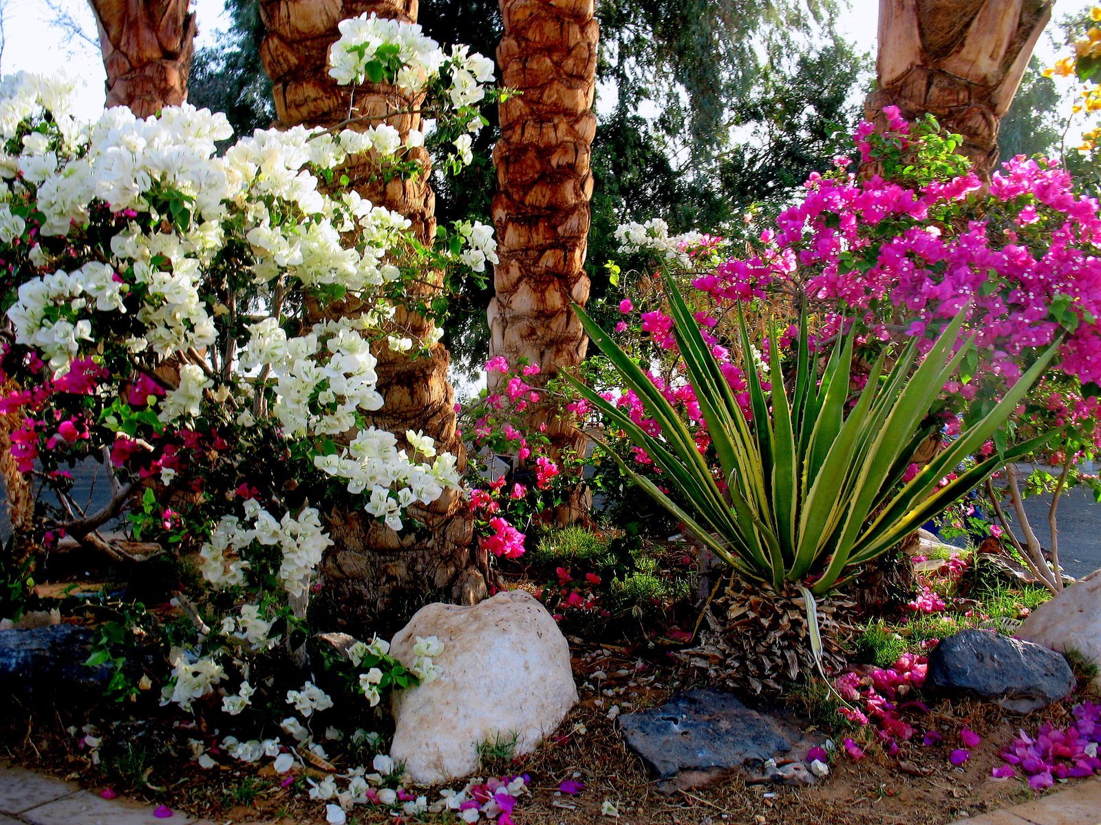 30 mai 2009 paysages et fleurs au fil de l 39 eau for Jardin de fleurs a visiter