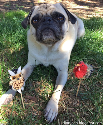 Liam the pug poses with two fall bird friends