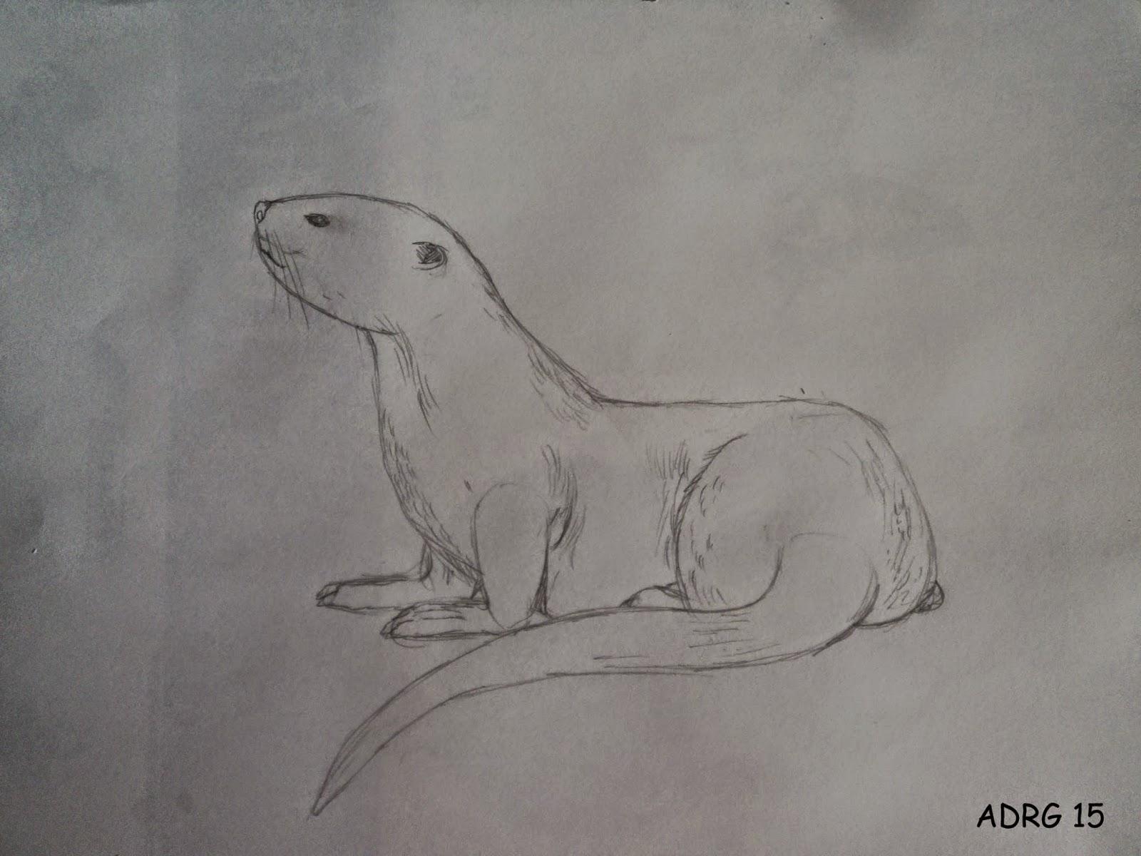 UN AMBIENTALISTA: Dibujando en la Naturaleza