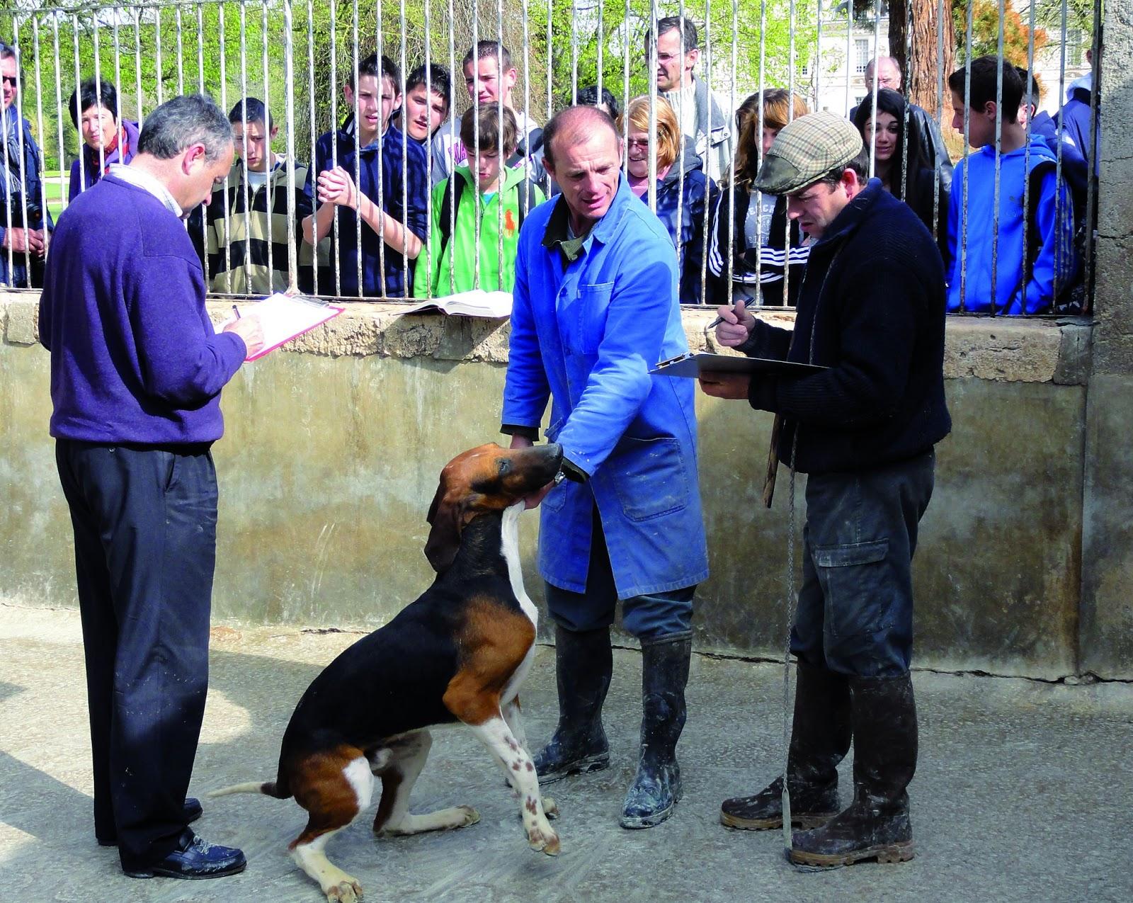 site de rencontre pour chien et maitre