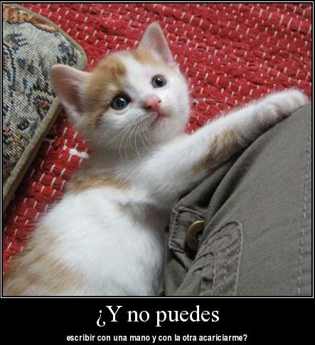 Imagenes Graciosas De Animales En Facebook Mundo  - imagenes chistosas de animales con mensajes