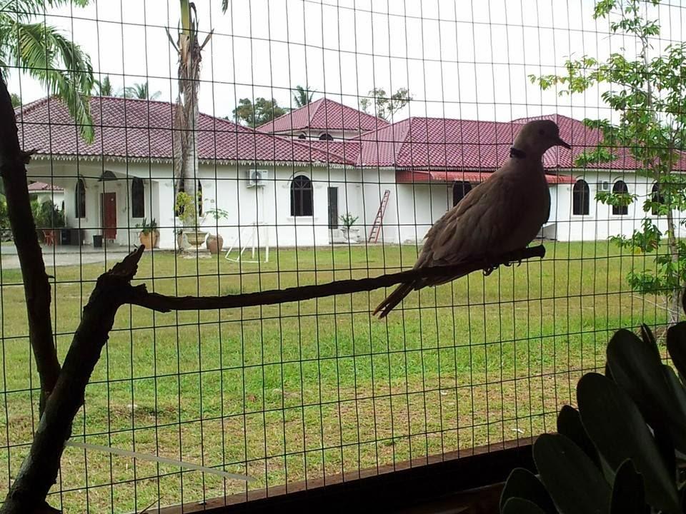 impian Country Resort, Batu Pahat, Johor: January 2014