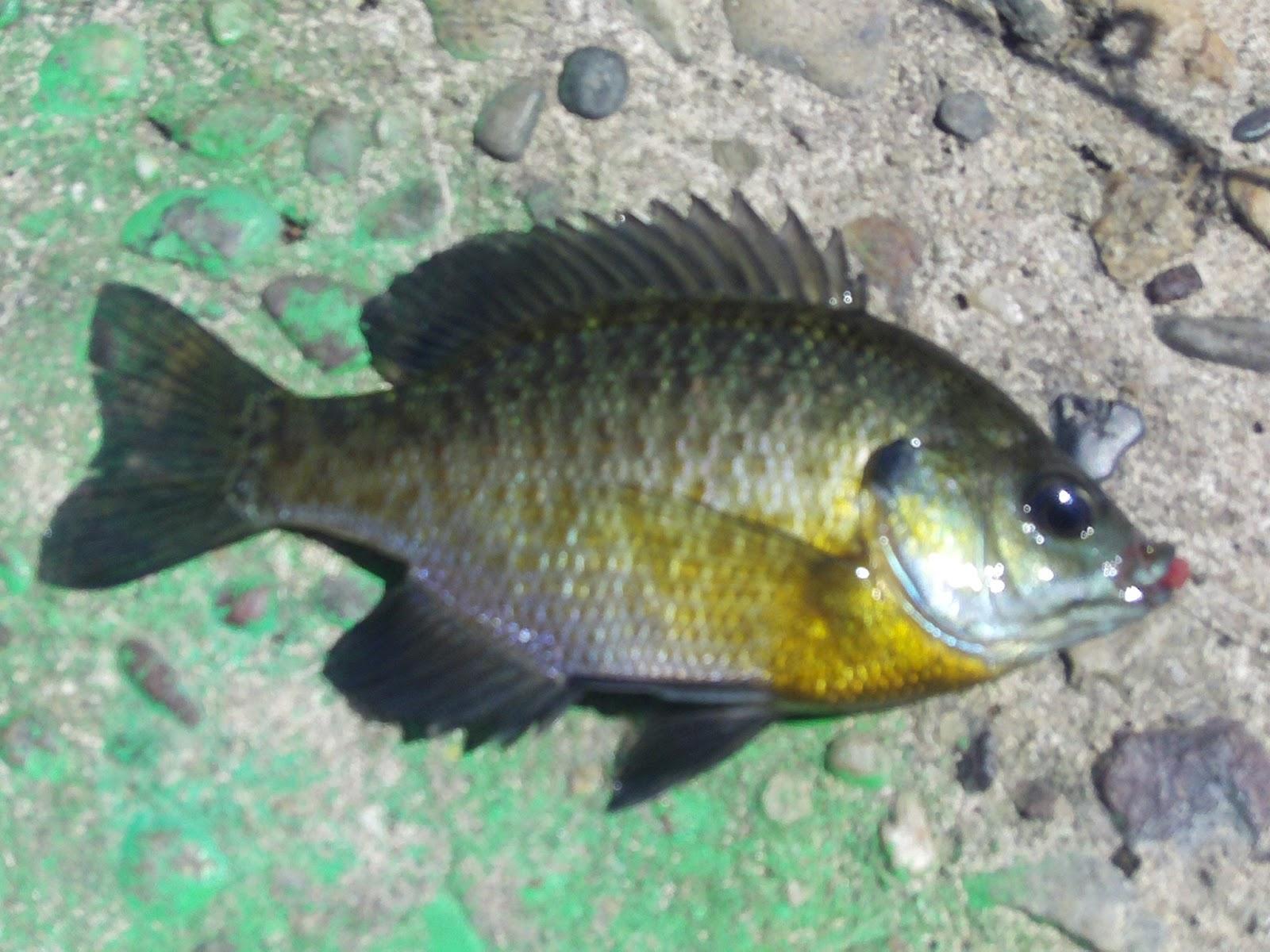 Fishing in philadelphia first time fishing krikwood lake nj for Little fish philadelphia