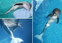 Dolphin Tale based on a true story!