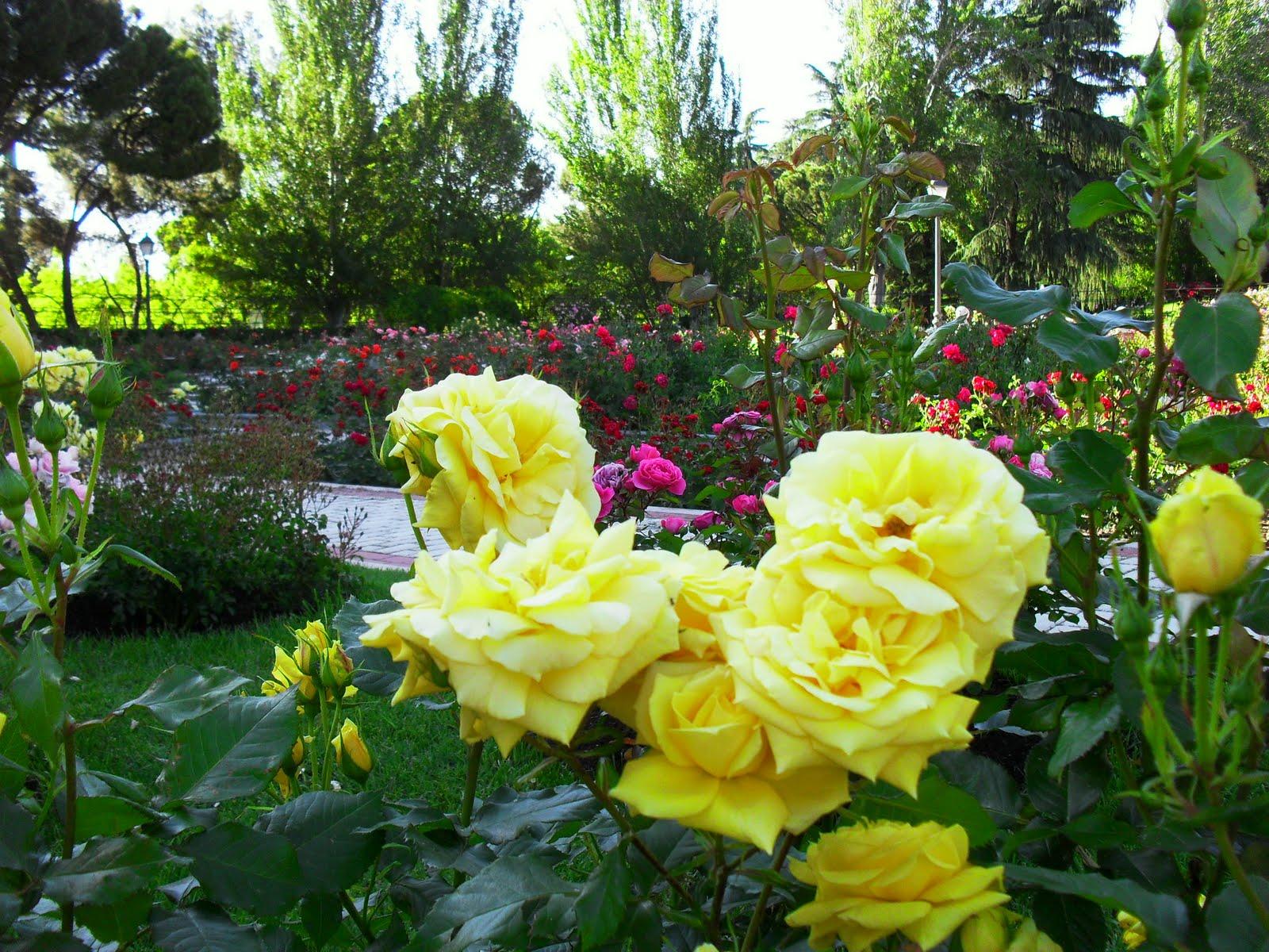 Arte y jardiner a rosaleda parque del oeste for Paginas de jardineria