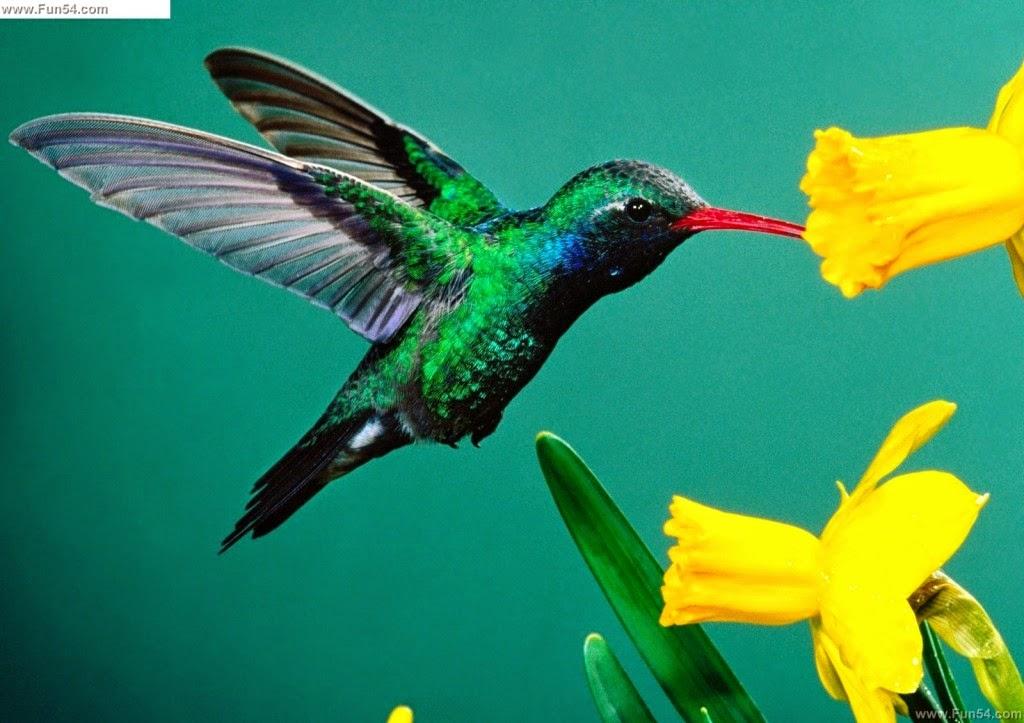 hình ảnh chim đẹp nhất thế giới