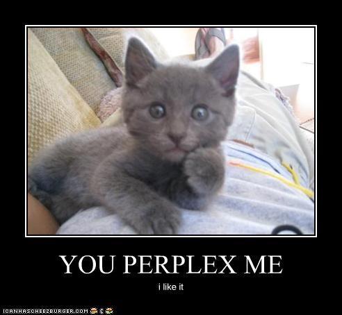 gif perplexed kitty