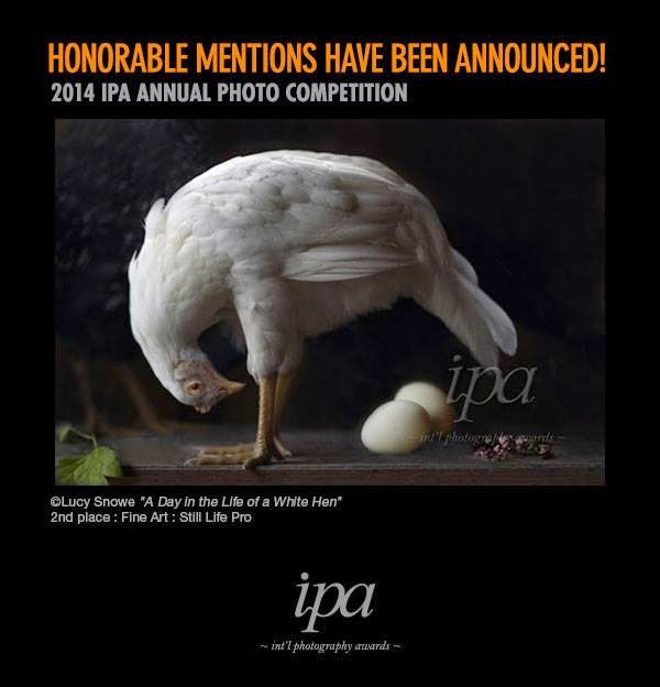 http://www.photoawards.com/en/Pages/Gallery/winner_2014_announcement.php