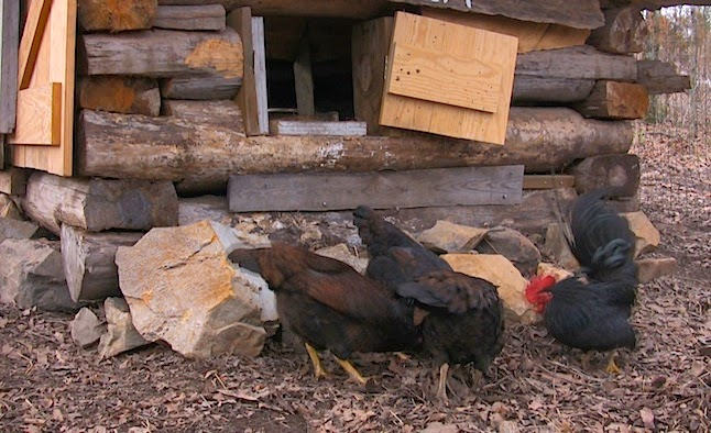 Building a Log Chicken Coop, shared by Farm Hand's Companion