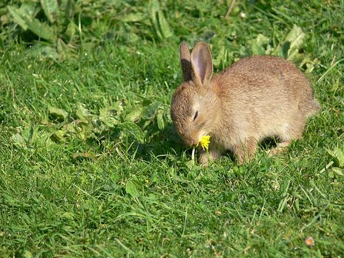 Bcomemamma piante velenose per i coniglietti for Piante velenose per i cani