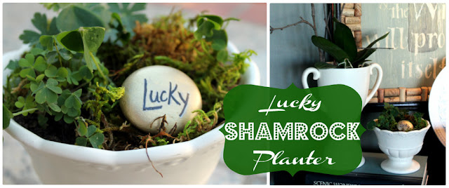 shamrock, st patricks day, st pattys day, planter, clover, white, plant, lucky