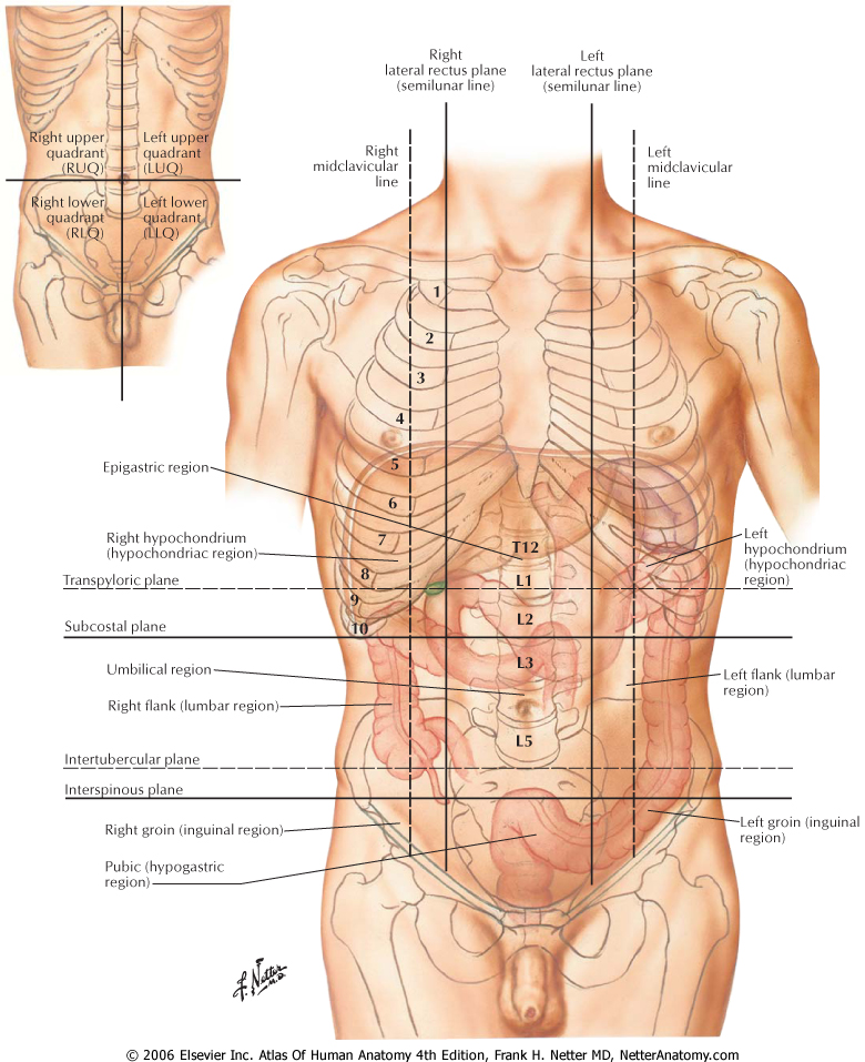 what you know about topographic anatomy of the abdomen | blogger uni ...