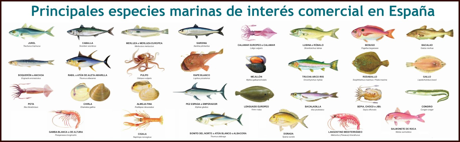 Naturarchives biodiversidad el reino de los animales for Especies de peces