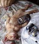 Drunk Cat | Kucing Pemabuk | Funny Picture