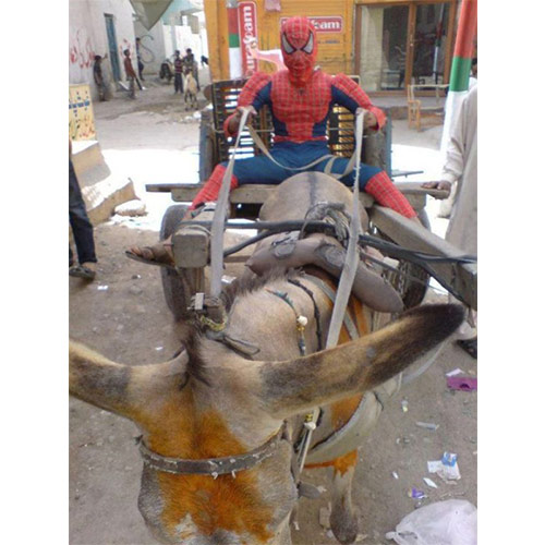 real spider man in world