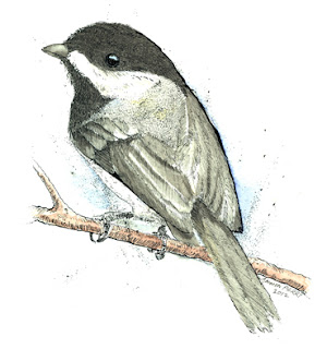 drawing of chickadee in frame for charity auctino