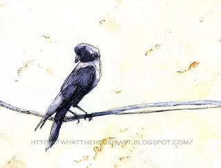 crows by gurmeet