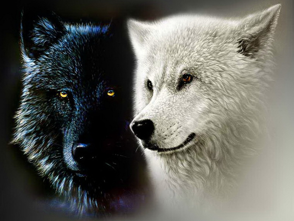 Wolves standing face to face witn contrast colors