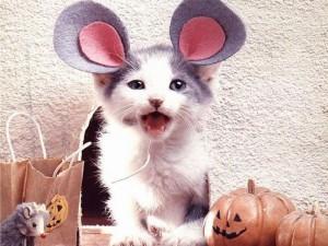 gato disfrazado de raton