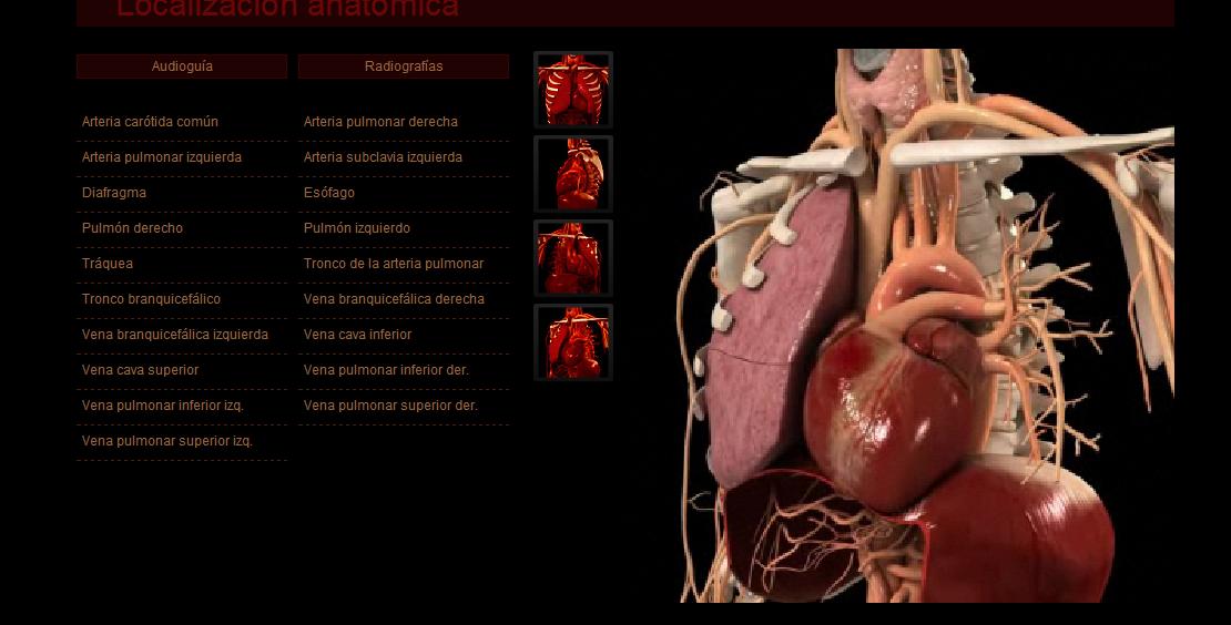 Maestros de Corazón: Anatomía del corazón,guía virtual multimedia