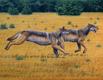 fossil canidae Aelurodon
