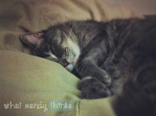 What Mandy Thinks: Image of Jimmy the Cat sleeping