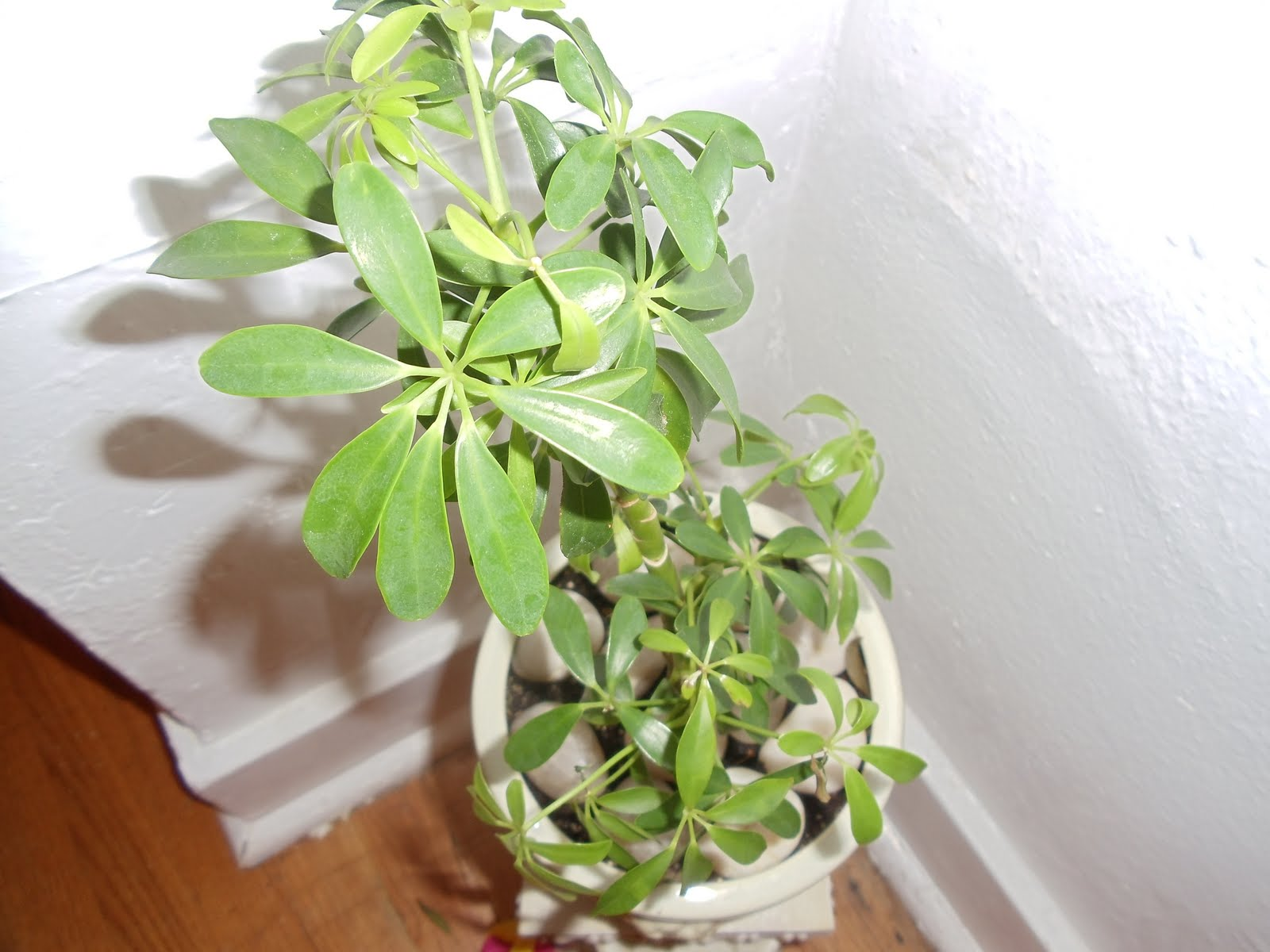 Simple happy life unlucky lucky plants - Plants for inside the house ...