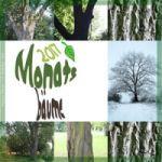 Monatsbäume