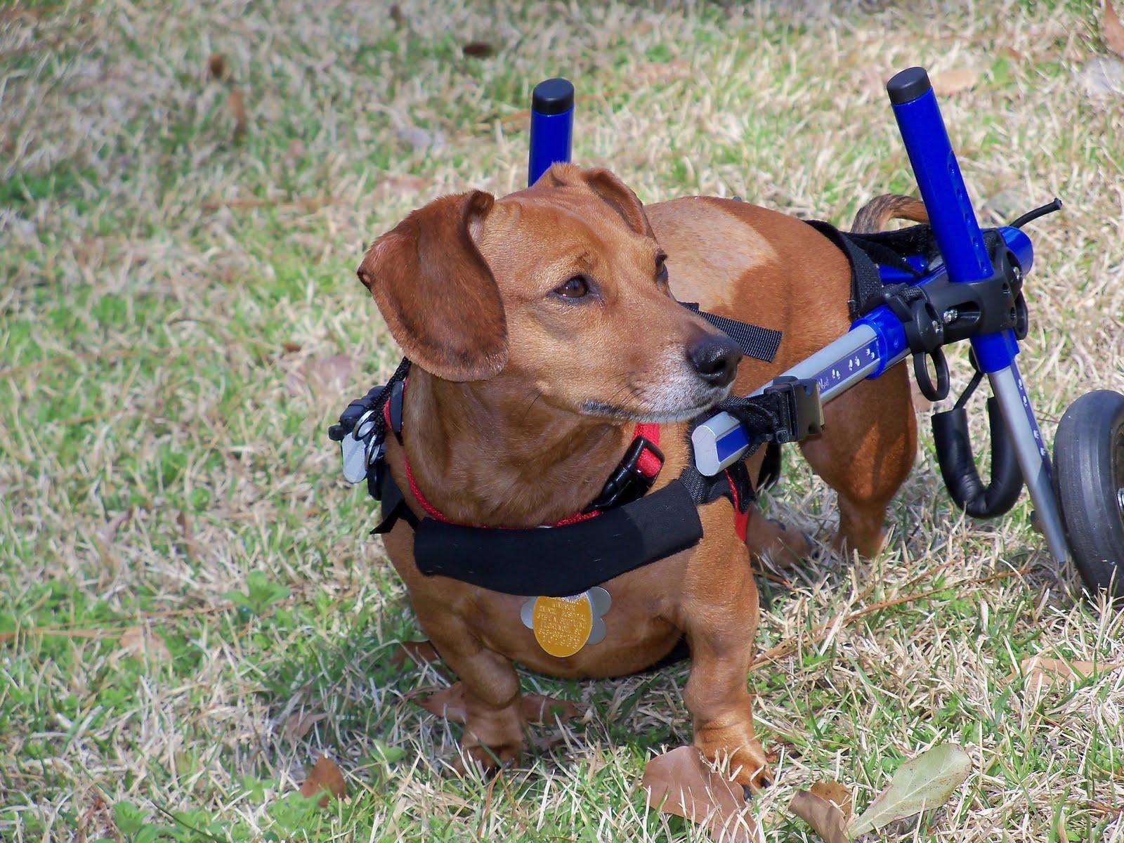 Walkin Wheels Dog Wheelchair Uk