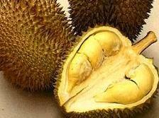 Kandungan Manfaat Dan Khasiat Buah Durian Bagi Kesehatan