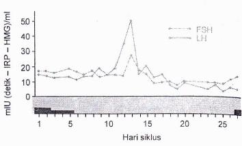 Siklus pelepasan gonadotropin bulanan pada menstruasi perempuan yang normal. Puncaknya adalah pertengahan siklus ketika FSH dan LH meningkat secara tiba-tiba.n