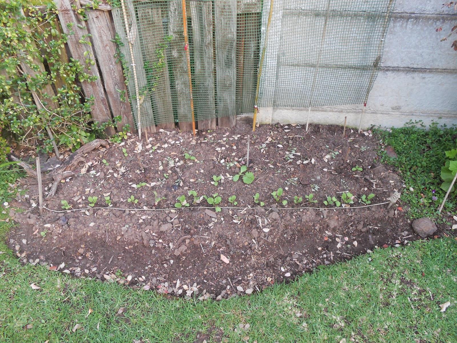 urban garden and backyard farming south africa