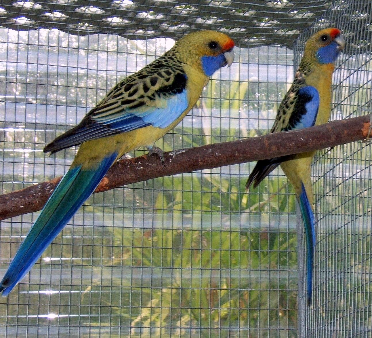 PetsJubilee: colorful birds